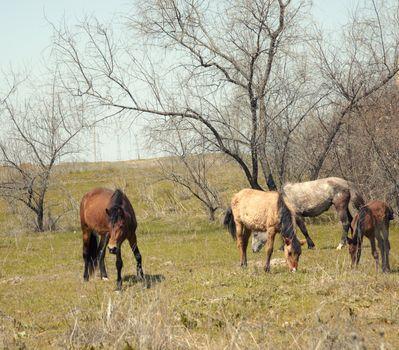 Browsing horses