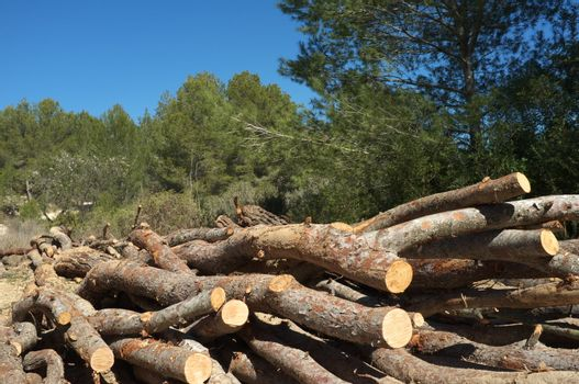 Forestry work