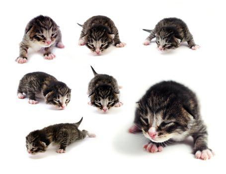 Blind kittens