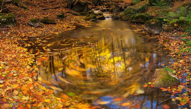 Autumn stream with moving leaves, wood and sky reflection in water