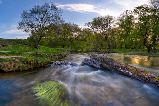 Rapid current on the spring river, around the wood, long exposure