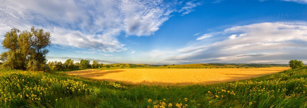 Panorama of a big summer field shined with the sun, with clouds in the sky on background