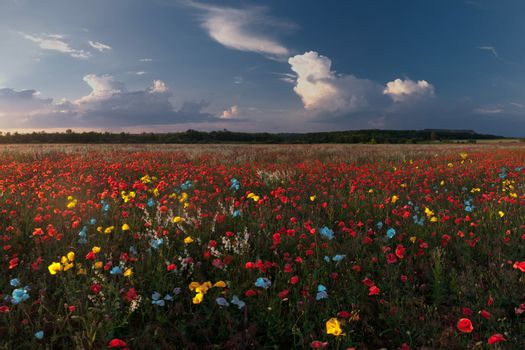 Landscape with colorful poppies field and majestic clouds in the sky