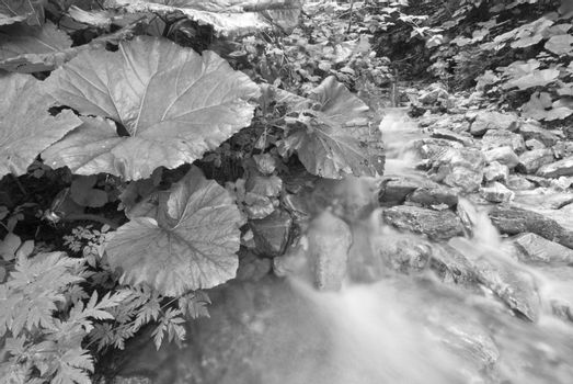 Flowing Water, Dolomites