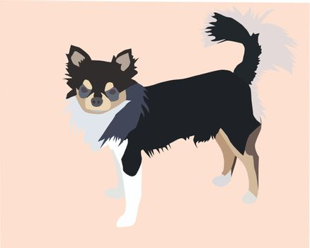 Vector file of male long hair chihuahua