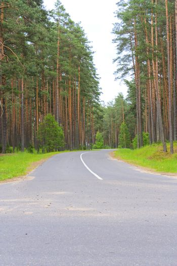 Forest road and crossroad