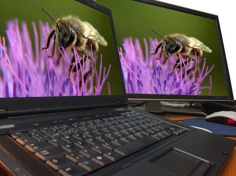 bee macro on sharp dual display...