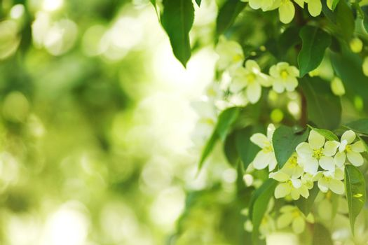 white summer flowers