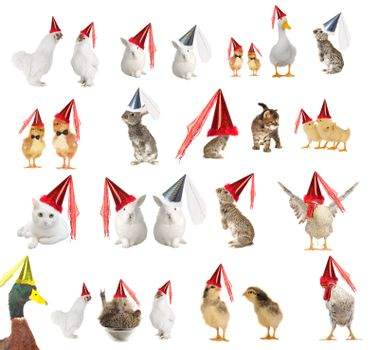 Animals in celebratory caps on a white background