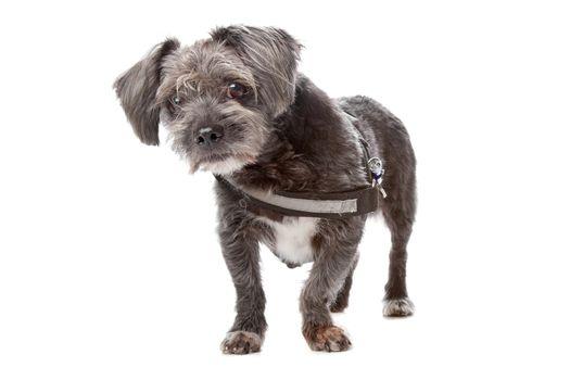 mixed breed dog