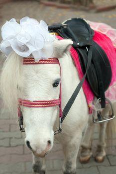 Bride ponies