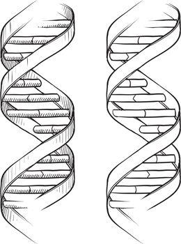 DNA double helix sketch