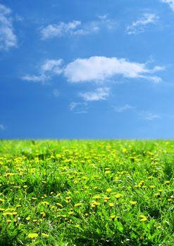 green grass landscape nature background