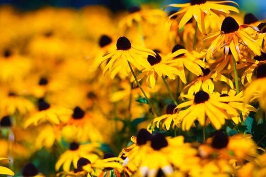 natural flower in natur