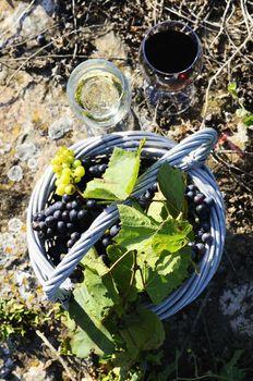 harvest and wine