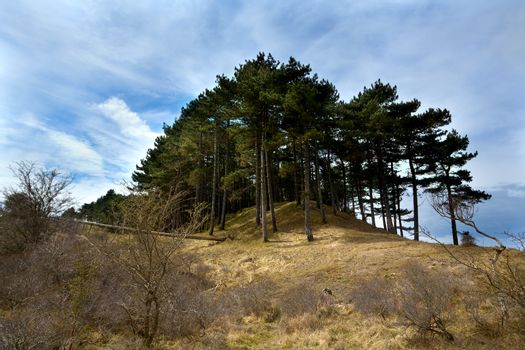 coniferous forest on hill