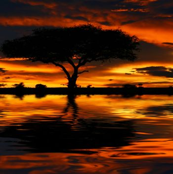 Tree silhouette and dramatic sunset