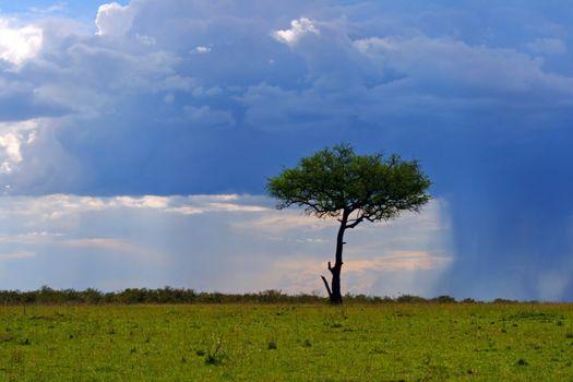 Single tree on the field