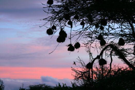 Pinky sunrise