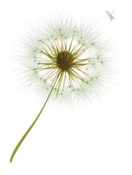 vector Dandelion Wind Blow Flower