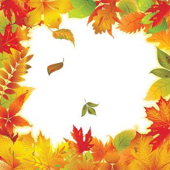 Framework of the autumn leaves