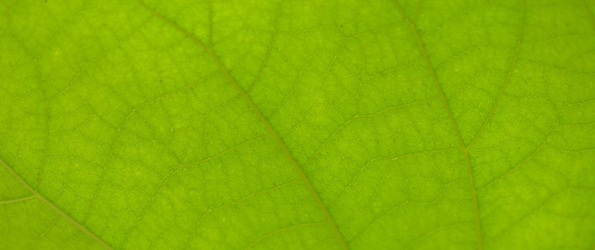 close up a surface of leaf