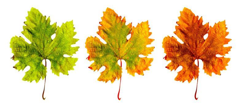 Three different leaf