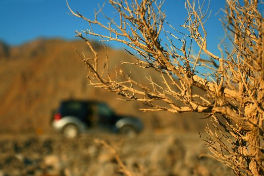 Desert road trip