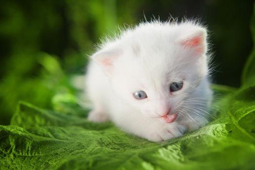 Sunny kitty