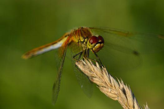 Pretty little dragonfly sitting on plant