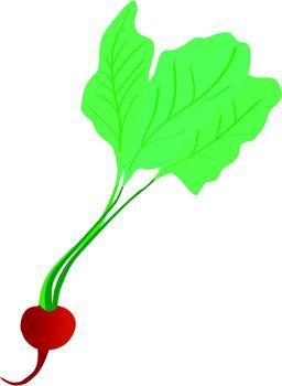radish with leaves