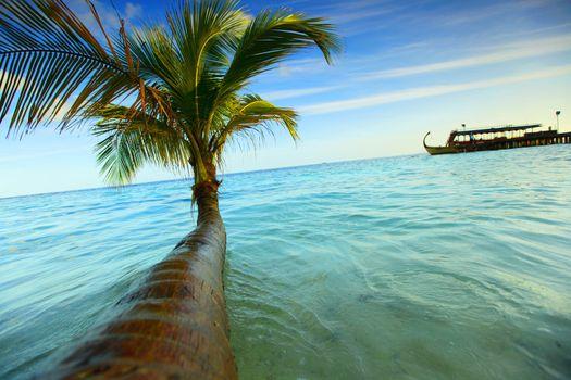 tropical island palm sea and sky