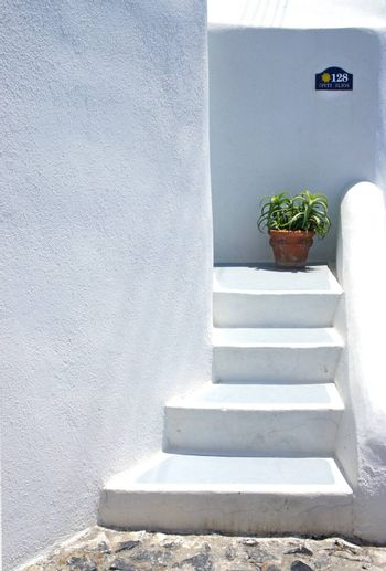 Houses of Santorini in details, pot with flower on the stairs