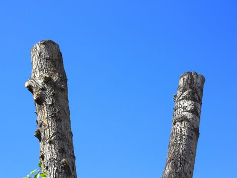 Sawed tree trunks on blue sky background.