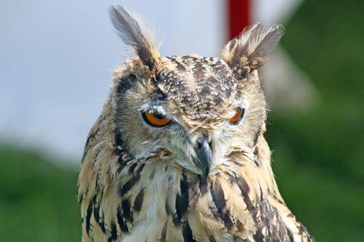 stunning owl