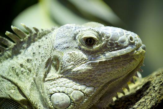 Green lizard skin detailing hard and scaly