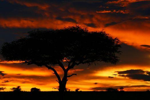 Tree shade and dramatic sunset