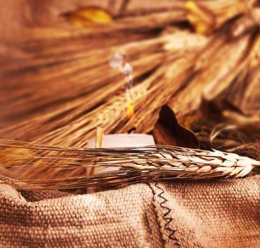Wheat on canvas