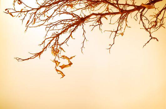 Autumnal tree branch
