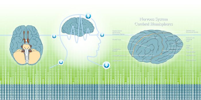 head and brain wave by brain on background illustration