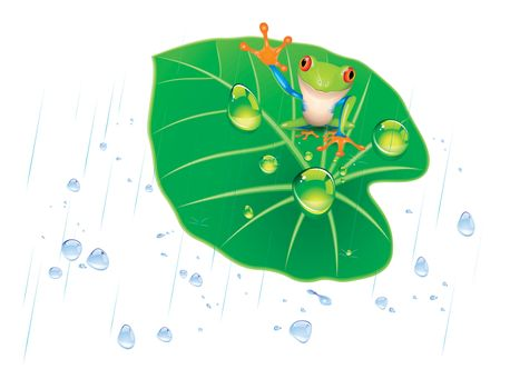 frog on the lotus leaf in the rain.