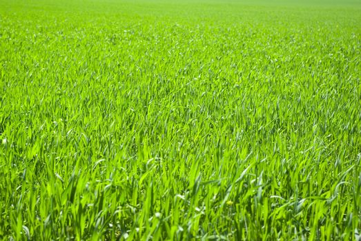 lawn backgrounds