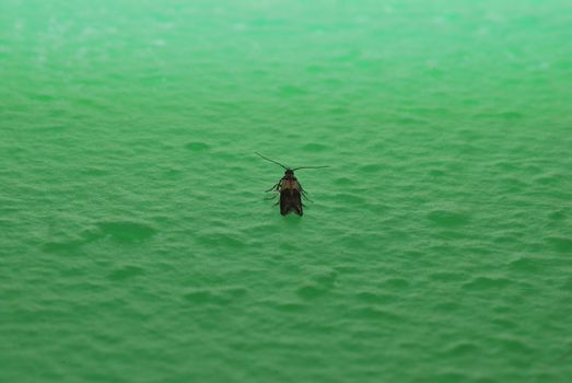 small moth sits on a green wall in the house
