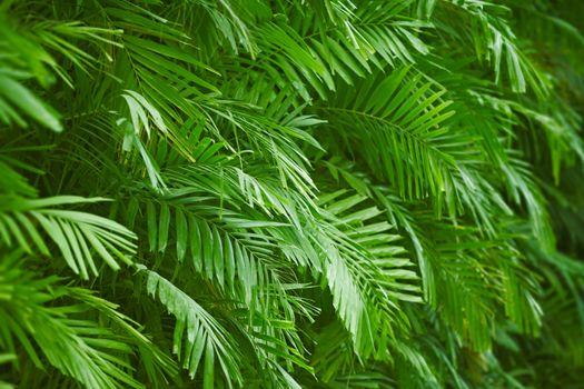 Palm foliage background