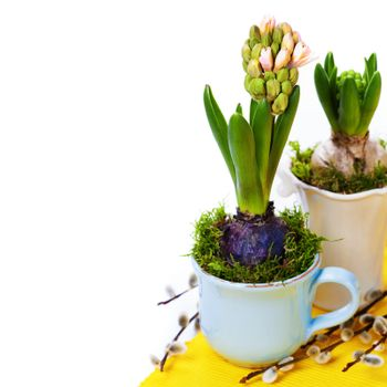growing spring flowers in a cups