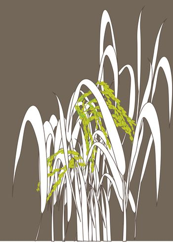 Graphic work of rice grain paddy