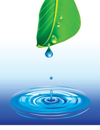 water or dew drop falling from a green leaf on water