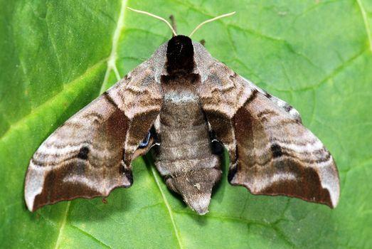 Moth on a stalk