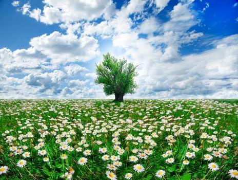 springtime and tree