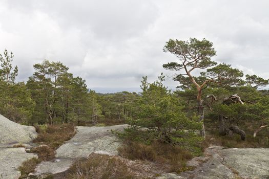 rural forest in norway